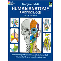 Human Anatomy Coloring Book - Margaret Matt | Oak Meadow Bookstore