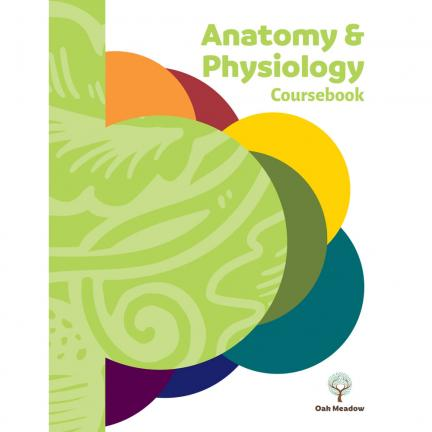 Anatomy & Physiology Coursebook - High School Science | Oak Meadow Bookstore