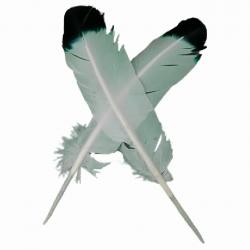 Feather Quill Pens (2) - Crafts & Supplies